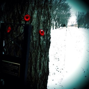 Some of my family went to the cemetery where my granddad is buried and put their poppies on his memorial tree. Had I been home, I would have done the same.